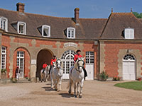 Voyages groupes au Haras national du Pin